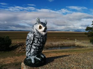 Hedwig at Lake George